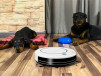 Robot Aspirador Inteligente Conga 750 WET - perros