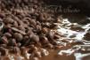 Chocolate con leche fundiéndose